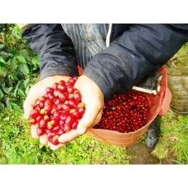 Café Guatemala Huehuetenango - Organic